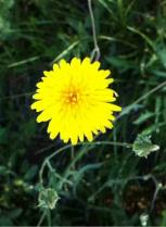 image fleur.jpg (18.6kB)