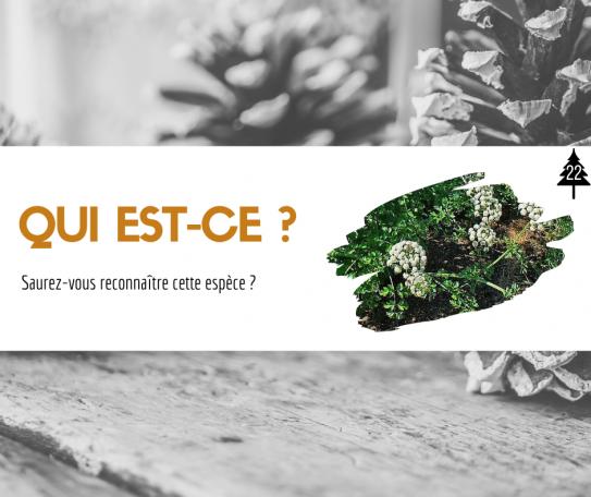 image Qui_estce_.png (0.5MB)