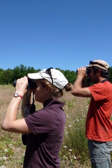 expertise naturaliste herault inventaires suivis naturalistes