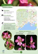 image 6_Gladiolus_dubius1.jpg (0.2MB)