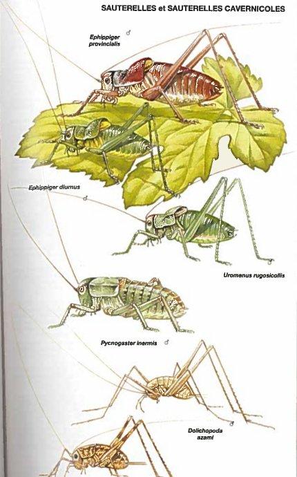 image insectesa.jpg (60.9kB)