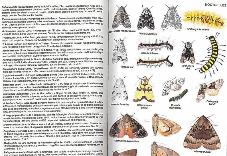 image insectesb.jpg (0.2MB)