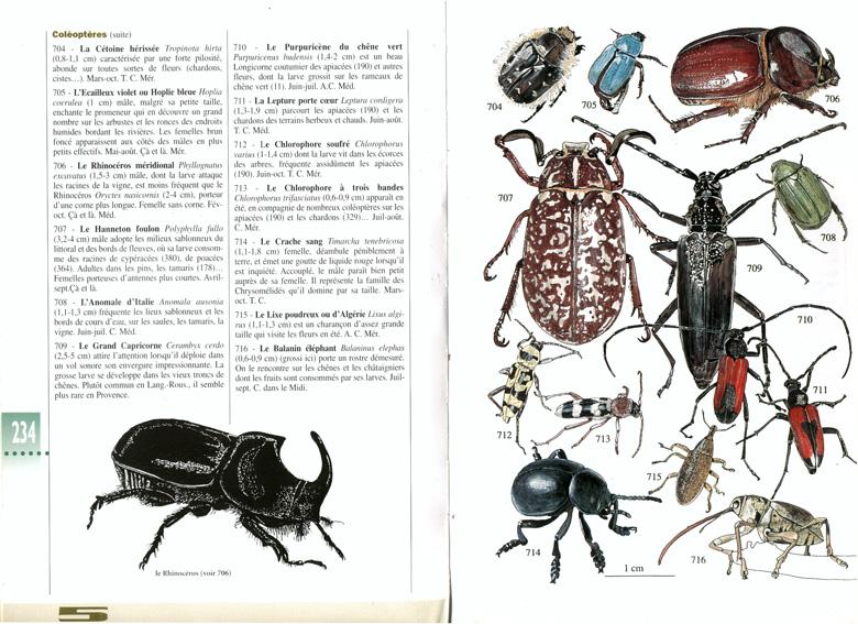 image CisteColeos_NatMedcoleos_20120727112850_20120727112942.jpg (0.4MB)