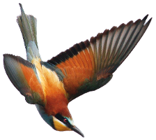 expertise naturaliste herault ecologistes euziere animation nature editions interpretation formation vie associative Lien vers: PagePrincipale