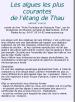 alguesthau Lien vers: http://www.euziere.org/wakka.php?wiki=RessourcesPlantes/download&file=AlguesThau1.pdf